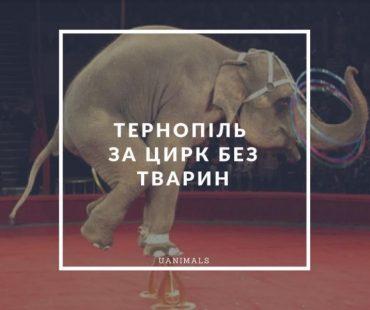 У Тернополі хочуть заборонити цирк з тваринами