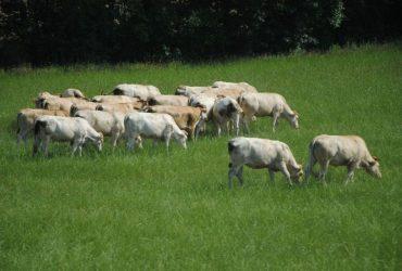 Аграрні розписки прийшли в тваринництво