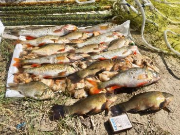 Браконьєрство на Івачівській водоймі в нерестовий період