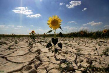 Чверть України страждає від сильної засухи