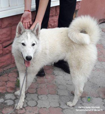Патрульні просять допомогти розшукати власника собаки