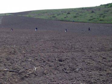 """Агрохолдинг """"Мрія"""" знищив гектар горіхових насаджень"""