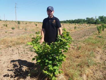 Про горіховий бізнес в Україні