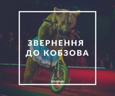 В Україні відійдуть від експлуатації тварин в цирку?