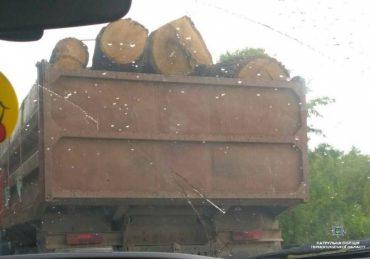 Біля Довжанки затримали вантажівку із незаконно вирубаним лісом