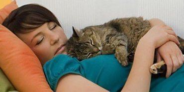 Чому кішка любить спати на людині?