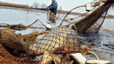 У 2018 році в Тернопільській області вирощено 394 тонн риби