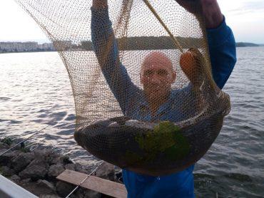 На тернопільському озері впіймали двох величезних коропів