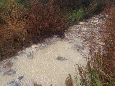 За Тернополем злили 30 тонн відходів молочних продуктів
