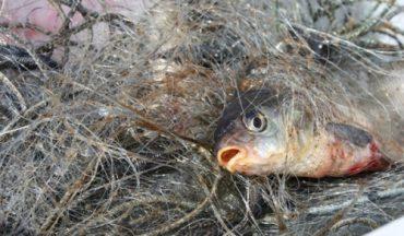 У Борщівському та Тернопільському районі найбільше браконьєрів