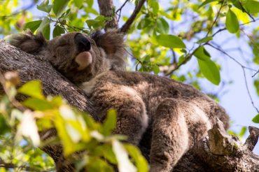 В Австралії висадять мільярд дерев заради порятунку клімату