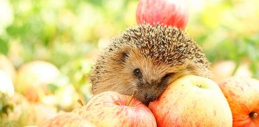 Як за рік овочі подорожчали на 37%, а яблука подешевшали на 47%