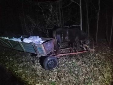 Троє українців двома підводами намагались провезти до Білорусі 800 кг сала у 28 мішках
