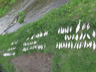 Біля села Устя Борщівського району впіймали трьох браконьєрів: хто з'їв впійману рибу – невідомо