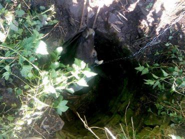 У Бучацькому районі визволили корову, котра впала до триметрового колодязя