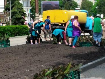 У Тернополі нібито насадять квітів на 8 мільйонів 300 тисяч гривень