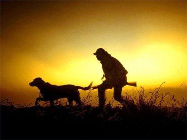 2 листопада стартує сезон полювання на хутряних та копитних звірів