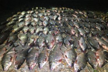 Тіньовий рибний ринок України сягає 6 мільярдів гривень