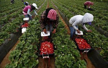 Українці становлять 90% трудових мігрантів в Польщі