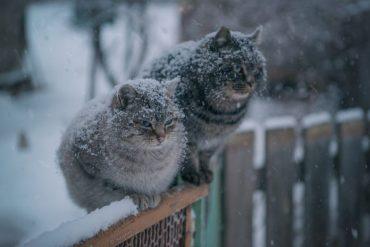 Наприкінці тижня в Тернополі похолодає до -3 градусів