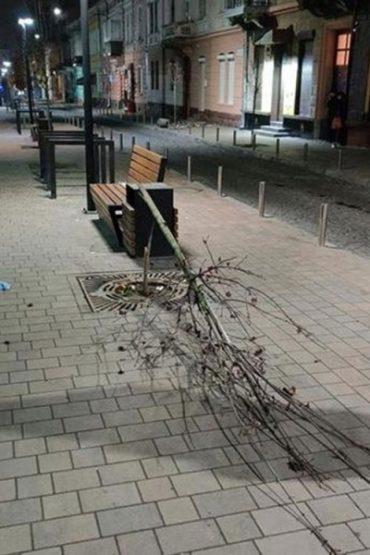 На чоловіка, який зламав дерево на вулиці Чорновола, складено два адмінпротоколи