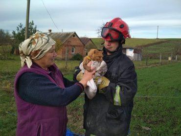 Рятувальники врятували кота