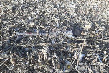 У кукурудзяному полі на Тернопільщині виявили муміфіковане тіло невідомого