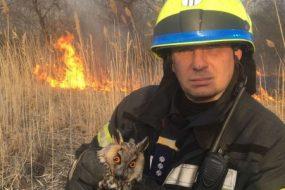 Під час пожежі в очеретах врятували двох сов