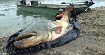 Італієць зловив в озері сома завдовжки в 2 метри 74 сантиметри