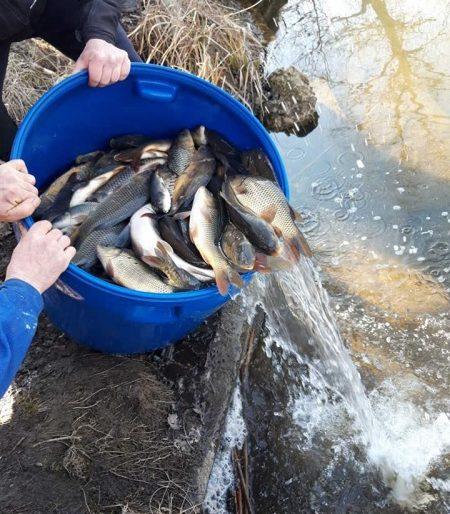 У ставки Козівщини запустили майже 400 кілограмів риби